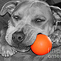Janice Rae Pariza - Hank The Pit Bull and...
