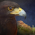 R christopher Vest - Harris Hawk Portrait...