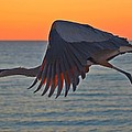 Jeff at JSJ Photography - Harry the Heron In...