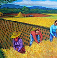 Lorna Maza - Harvest Season