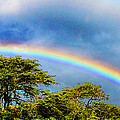 Diana Sainz - Hawaiian Double Rainbow...