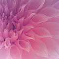The Art of Marilyn Ridoutt-Greene - Heart of a Dahlia
