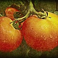 Chris Berry - Heirloom Tomatoes