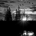 Gary Smith - Herons in Flight - Black...