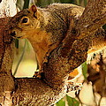 Jason  Sewell - Hiding Squirrel