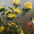 R christopher Vest - Hog Heaven Yellow Roses...