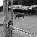 Dwight Cook - Horse and fence