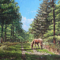 Martin Davey - Horse in New Forest