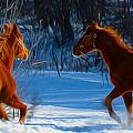 Tracy Winter - Horses at play
