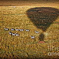Gary Keesler - Hot Air Balloon Safari