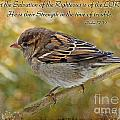 Debbie Portwood - House Sparrow with Verse