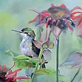 Donna Tuten - Hummingbird and...