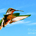 Bob and Nadine Johnston - Hummingbird Lodi...