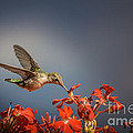 Jola Martysz - Hummingbird or My Summer...