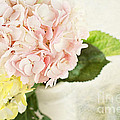 Stephanie Frey - Hydrangeas in Pastel