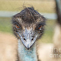 Rene Triay Photography - Inquisitive Stare of an...