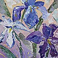 AmaS Art - Iris flowers