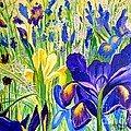Julie Brugh Riffey - Iris Spring