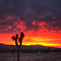 Eddie Yerkish - Joshua Tree Against The...