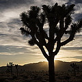 Lee Kirchhevel - Joshua Tree Sunset...