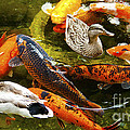 Jerry Cowart - Koi Fish in Pond...