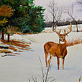 Alvin Hepler - Late Season -Droopy Ear
