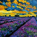 Julie Brugh Riffey - Lavender Fields At Dusk