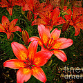 Beverly Guilliams - Lilies Hosea