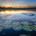 Debra and Dave Vanderlaan - Lily Pads in the Glades