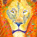 Aaron Koster - Lion