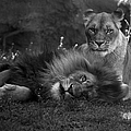 Thomas Woolworth - Lions Me And My Guy