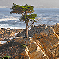 Christine Till - Lone Cypress - The icon...