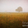 Dave Gordon - Lone Tree In Meadow No. 2