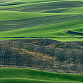 Don Schwartz - Lone Tree in the Palouse