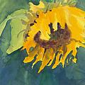 Joan Willoughby - Lonely Sunflower