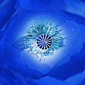 Jennie Marie Schell - Macro Blue Poppy Flower...