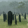 Bob Christopher - Magnetic Termite Mounds