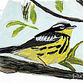 Lawrence Golla - Magnolia Warbler