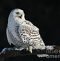 Inspired Nature Photography By Shelley Myke - Majestic Whisper - Snowy...