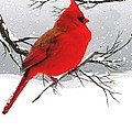 Janette Boyd - Male Cardinal in Winter
