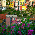 Inge Johnsson - Manarola Flowers and...