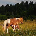 Rosemary Williams - Mare and Foal