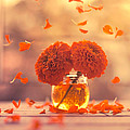 Ashraful Arefin - Marigold Days