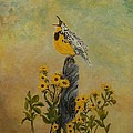 Connie Rowsell - Meadowlark Sings