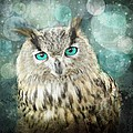 Barbara Orenya - Midnight Owl