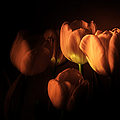 Julie Palencia - Midnight Tulips