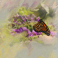 Diane Schuster - Monarch Butterfly On...