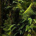 Jeff  Swan - Moss And Ferns Growing...