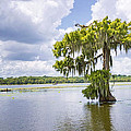 Bonnie Barry - Mossy Cypress on Lake...