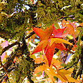 Baslee Troutman Nature Photography Art - Mossy Lichen Tree Leaves...